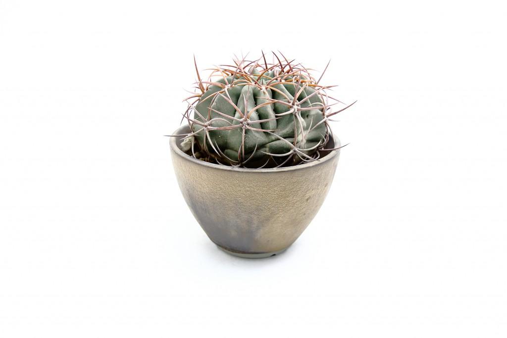 「RYOTA AOKI POTTERY」シリーズで Vol.9は「植木鉢」です!