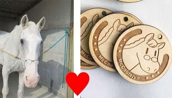 園田競馬場の日本最高齢誘導馬だった『マコーリー』のDVD写真集を作りたい!
